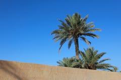 daktylowy Africa drzewko palmowe Tunisia Obraz Royalty Free