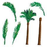 Daktylowy drzewko palmowe zestaw Obrazy Stock