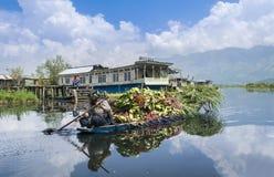Dal湖的,斯利那加克什米尔人妇女运载的饲料植物 图库摄影