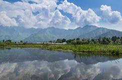 Dal湖风景反射,斯利那加,克什米尔,印度 库存图片