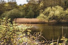 Dal av det vård- dammet, Hampstead hed arkivbilder