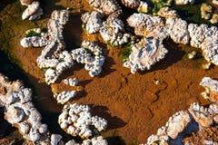 Dal av Hot Springs nära Hveragerdi, closeup för varm vår, Island Arkivfoto