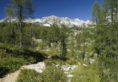 Dal av sju Triglav lakes i Julian Alps Royaltyfria Bilder