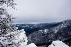 Dal för höga berg som täckas av snö Solen är glänsande Berg kan ses igenom träden arkivbilder