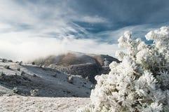 Dal för höga berg som täckas av snö Solen är glänsande Snö-täckt dal Landskap till och med träden fotografering för bildbyråer