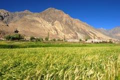 dal för india ladakhnubra Royaltyfri Foto