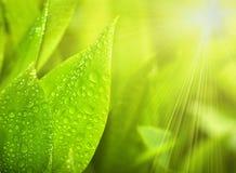 dal för trädgårdgräsliljar royaltyfri fotografi