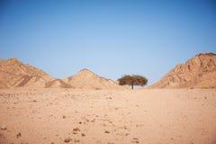 Dal i öknen med ett akaciaträd med berg Fotografering för Bildbyråer