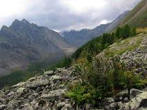 Dal i bergen Arkivbild