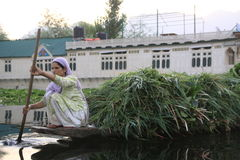 Dal lake. Indian woman on the way to Vegetables market royalty free stock photos