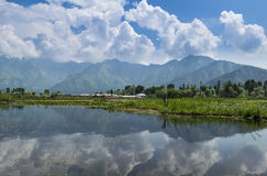 Dal Lake landscape reflection, Srinagar, Kashmir, India. The Dal Lake water reflecting the Himalayan mountains and the blue sky. The water lilies grow on water Stock Images