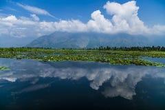 Dal Lake Water Lilly met Wolken Royalty-vrije Stock Afbeeldingen