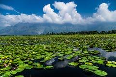 Dal Lake Water Lilly met Wolken Stock Foto's