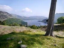 Dal tronco di albero che guarda a Ullswater, distretto del lago Fotografia Stock Libera da Diritti