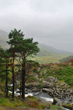 dal welsh Fotografering för Bildbyråer