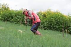 Dalat farmers harvested onions Stock Photos