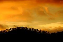 Dalat-Landschaft im Sonnenuntergang mit Reihe des Baums Stockfoto