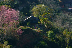 Dalat na mola, flor de sakura Imagens de Stock Royalty Free