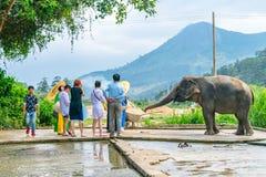 DALAT, VIETNAM - APRIL 15, 2019: De toeristen voeden een olifant op een reis in Dalat Vietnam royalty-vrije stock fotografie