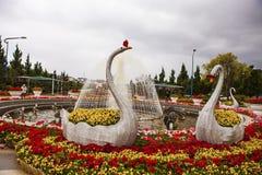 DALAT, VIETNAM - 17 de febrero de 2017: Cisnes en jardín de flores Imágenes de archivo libres de regalías