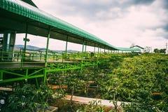 DALAT, VIETNAM - 17 febbraio 2017: Vista piacevole del paesaggio da me caffè di Linh, Lat del Da, Viet Nam Fotografie Stock Libere da Diritti