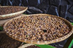 DALAT, VIETNAM - 17. Februar 2017: Kaffee auf Bauernhof nahe DA-Latstadt in Vietnam Stockfoto