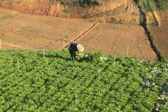 Dalat, Vietnam, il 18 gennaio 2016: Agricoltore che lavora nel campo Immagine Stock