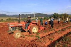 Dalat, Vietnam, il 18 gennaio 2016: Agricoltore che raccoglie le patate nel campo Immagini Stock Libere da Diritti