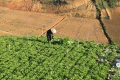 Dalat, Vietnam, am 18. Januar 2016: Landwirt, der auf dem Gebiet arbeitet Lizenzfreie Stockbilder