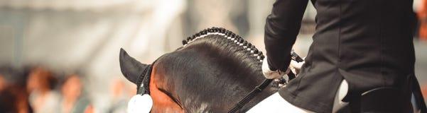 Dalbies del cavallo fotografati da dietro nel dressage sopra il collo fotografia stock libera da diritti