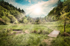 Dalby Forest Royalty Free Stock Photo
