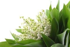 dale lily fotografia stock
