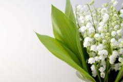 dale lily Obrazy Stock