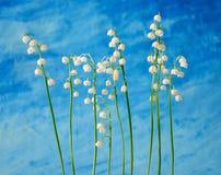dale lily zdjęcie royalty free