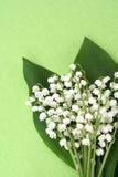 dale lily zdjęcia stock