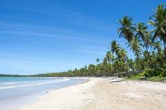 Dalecy Tropikalni brazylijczyk plaży drzewka palmowe fotografia stock