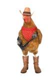 daleki kurczaka zachód Obraz Royalty Free