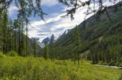 Dalen av den Shavla floden Altai berg, Ryssland royaltyfria bilder