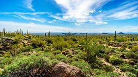 Dalen av solen med staden av Phoenix beskådade från det Usery berget Reginal parkerar Arkivbild