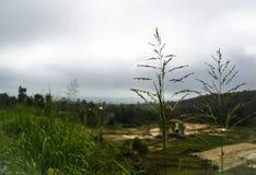 Dalen har använts i jordbruk Arkivbild