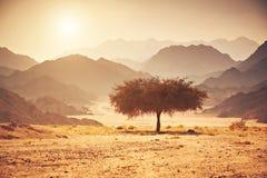 Dalen i öknen med ett akaciaträd med berget vaggar och solen Arkivbilder