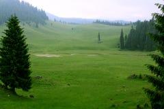 Dalen med sörjer träd i bergen Arkivfoton