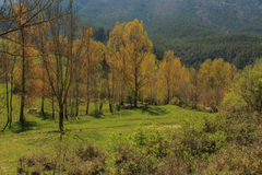Dalen mycket av högväxta torra träd Arkivfoto