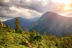 Dalen nära det Adam maximumet, Sri Lanka Arkivfoton