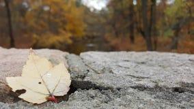 Dalend blad door de rivier Royalty-vrije Stock Afbeelding