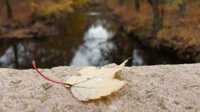 Dalend blad door de rivier Royalty-vrije Stock Fotografie