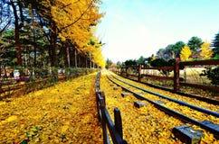 Dalende bladeren in de herfst Royalty-vrije Stock Fotografie
