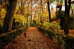 Dalende bladeren in de herfst royalty-vrije stock afbeelding
