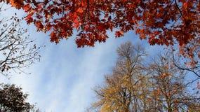 Dalende Bladeren met Bewolkte Hemel royalty-vrije stock fotografie