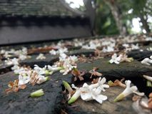 Dalende bloem Royalty-vrije Stock Foto